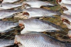 干上升的栖息处鱼 图库摄影