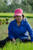 干丹省,柬埔寨- 2013年12月31日-女性米工作 库存照片