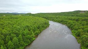干净的河在绿色森林里和小山空中射击在狂放的可乐树半岛区域 股票视频