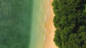 干净的海滩空中顶视图与清楚的水和绿色树的 股票视频