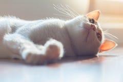 干净的CAT 免版税库存照片