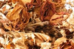 干凋枯的玫瑰 免版税库存照片