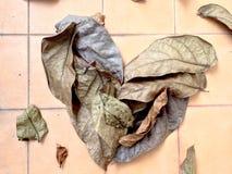 干叶子心脏墙纸 免版税图库摄影