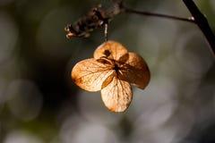 干叶子瓣在阳光下 免版税库存照片