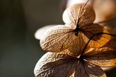 干叶子瓣在阳光下 图库摄影