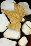 干叶子石头 免版税库存图片