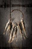 干和咸鱼 免版税图库摄影