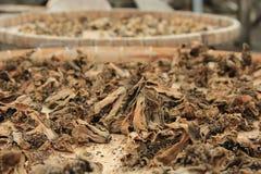 干圆白菜在传统村庄在香港 免版税库存照片