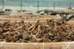 干圆白菜在传统村庄在香港 库存照片