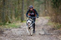 干地带拉雪橇狗赛跑 图库摄影