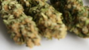 干大麻医疗大麻焦点拉扯 影视素材