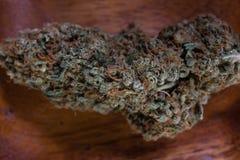 干大麻大麻芽 免版税库存照片