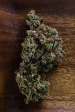 干大麻大麻芽 免版税图库摄影