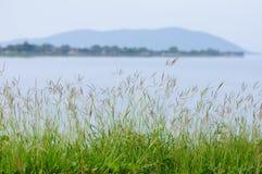 干布什草在水坝边 库存图片