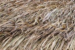 干干草屋顶的关闭自然本底纹理的 库存图片