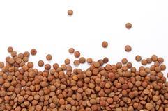 干扁豆 免版税库存照片
