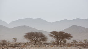 干旱和热的天在撒哈拉大沙漠,陶陶的沙漠 免版税库存图片