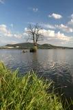 干旱的树在湖 库存图片