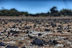 干旱的横向 库存照片