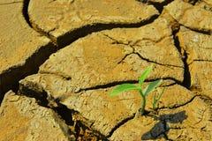 干旱的破裂的土地和绿色植物 免版税库存照片
