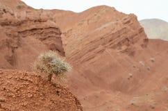 干旱碎小树枝新芽 免版税库存图片