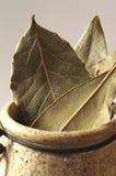 干月桂树叶子 库存照片