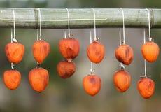 干果亚洲柿树 免版税库存图片