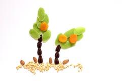 干果子和杏仁- Jweish假日Tu Bishvat的标志 免版税库存图片