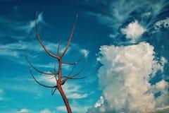 干树和奇怪的云彩 免版税图库摄影
