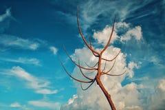 干树和奇怪的云彩 库存照片