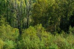 干树在森林里 免版税库存照片