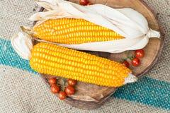 干棕色玉米 免版税库存图片