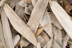 干棕色竹子在地板纹理背景离开 库存图片