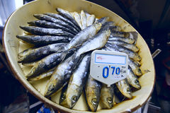干沙丁鱼 库存照片