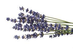 干淡紫色 库存图片