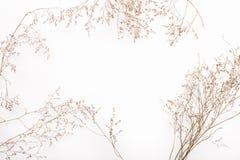 干灌木的抽象棕色枝杈 图库摄影