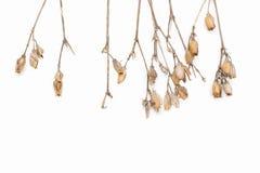 干灌木的抽象棕色枝杈 免版税图库摄影
