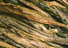 干烟草叶子 背景金黄叶子 库存图片