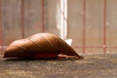 干燥事假秋天的关闭在地面 库存图片