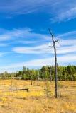 干燥偏僻的一个词根结构树 免版税库存图片