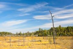 干燥偏僻的一个词根结构树 库存照片