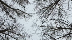 干燥光秃的秋天树 影视素材