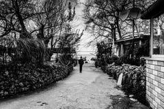 干燥冬天在国家土耳其的马尔马拉地区 免版税库存照片