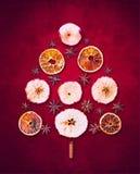 干燥冬天结果实在红色背景的圣诞树 免版税库存图片
