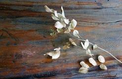 干燥分支和叶子顶视图有浅褐色的颜色的在木桌上 免版税库存照片