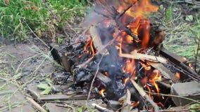 干燥分支在地面,树分支在火烧烧 股票录像