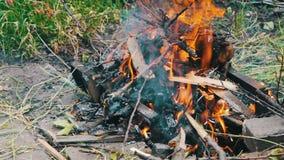 干燥分支在地面,树分支在火烧烧 股票视频