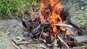 干燥分支在地面,树分支在火烧烧 影视素材
