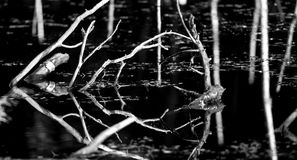 干燥发球区域日志风景  库存照片