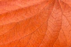 干燥叶子、背景和纹理 图库摄影
